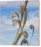 Curled Grasses Wood Print