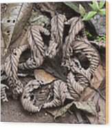 Curled Leaves Wood Print