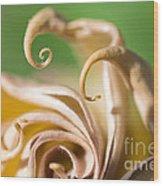 Curled Petals Wood Print