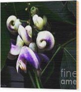 Curlicues Wood Print