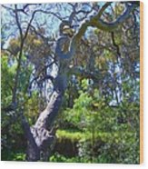 Curly Tree Wood Print