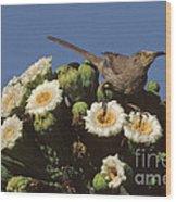 Curve-billed Thrasher Toxostoma Wood Print