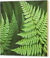 Curved Fern Leaf Wood Print