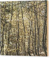 Curved Trunks Wood Print