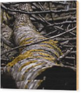 Curves  Leif Sohlman Wood Print