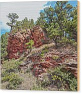 Custer State Park Ecology Wood Print