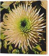 Cut Flowers Wood Print by Joyce Woodhouse