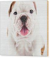 Cute Bulldog Puppy On White Background Wood Print