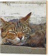 Cute Cat Wood Print by Borislav Marinic