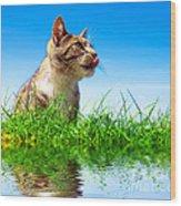 Cute Cat Outdoor Portait Wood Print