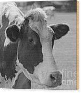Cute Cow - Black And White Wood Print