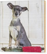 Cute Dog Washtub Wood Print