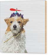 Cute Dog With Propeller Hat - The Wood Print