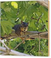 Cute Fuzzy Squirrel In Tree Wood Print