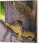 Cute Fuzzy Squirrel In Tree Near Garden Wood Print