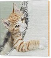 Cute Ginger Kitten In Igloo Wood Print