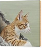 Cute Ginger Kitten On The Loookout Wood Print