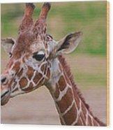 Cute Giraffe Portrait  Wood Print