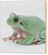 Cute Green Frog Wood Print