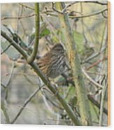 Cute Little Thrush Wood Print