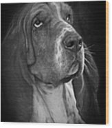 Cute Overload - The Basset Hound Wood Print by Christine Till