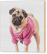 Cute Pug Wearing Sweater Wood Print