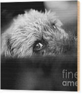 Cute Pup Sneek A Peek Wood Print