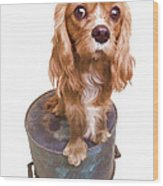 Cute Puppy Card Wood Print by Edward Fielding
