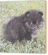 Cute Puppy Wood Print