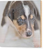 Cute Smooth Collie Puppy Wood Print