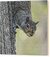 Cute Squirrel  Dare Me Wood Print