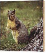 Cute Squirrel Wood Print by Robert Bales