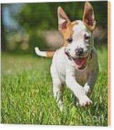 Cute Stafford Puppy Running On Field Wood Print