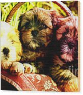 Cute Terrier Puppies Wood Print by Marvin Blaine