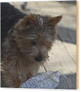 Cutest Dog Ever - Animal - 011311 Wood Print by DC Photographer