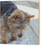Cutest Dog Ever - Animal - 011313 Wood Print by DC Photographer