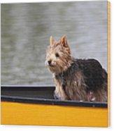 Cutest Dog Ever - Animal - 011342 Wood Print