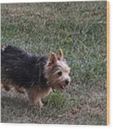 Cutest Dog Ever - Animal - 011345 Wood Print by DC Photographer