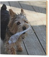 Cutest Dog Ever - Animal - 01135 Wood Print by DC Photographer