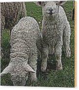 Cutest Lamb Ever Wood Print