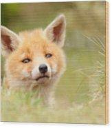 Cutie Face _red Fox Kit Wood Print