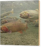 Cutthroat Trout In The Spring Idaho Wood Print by Michael Quinton