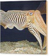 Cuttlefish 1 Wood Print