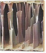 Cuttlefish Bone Sem Wood Print by Power And Syred