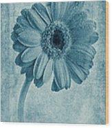 Cyanotype Gerbera Hybrida With Textures Wood Print
