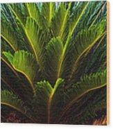 Cycad Sago Palm Wood Print