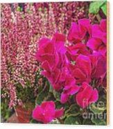 Cyclamen Flower Wood Print