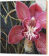 Cymbidium Flower Wood Print