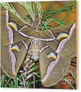 Cynthia Moth Wood Print