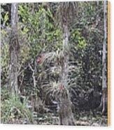 Cypress Airplant Display Wood Print